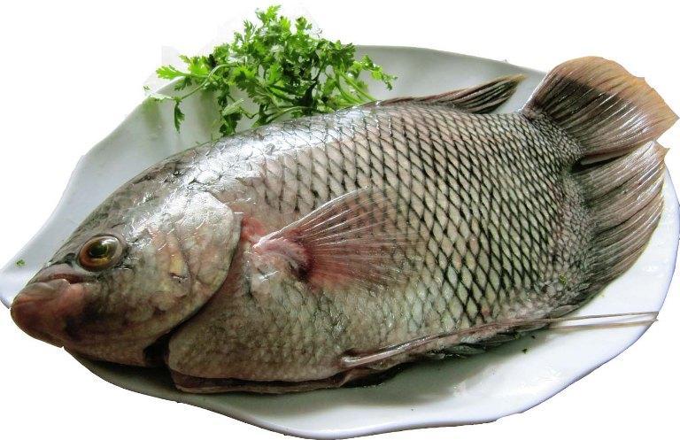 Cá Trê Tượng